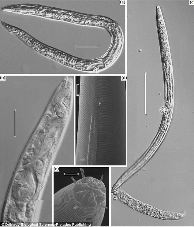 Sinh vật cổ đại 42.000 tuổi này bất ngờ