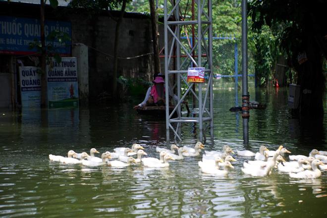 Nội thành Hà Nội 'thoát' ngập sâu sau nhiều ngày lo lắng, đê tả Bùi hạ báo động vỡ, tràn 11