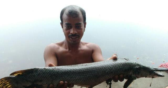 Quái vật tiền sử ở hồ Ấn Độ: 'Hóa thạch sống' phải dùng rìu mới cắt được 2