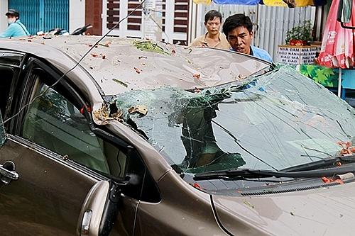 Cây phượng hàng chục năm tuổi bật gốc, đè bẹp ô tô trên phố Nha Trang 2