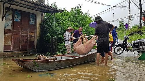 Hơn 7.000 người dân Thanh Hoá trắng đêm chạy lũ 3