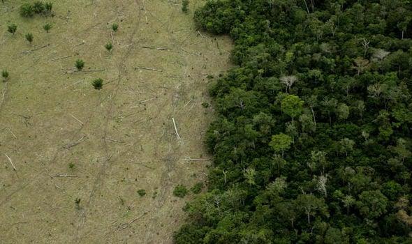 Bí ẩn sự biến mất của nền văn minh Maya cuối cùng cũng được tiết lộ 2