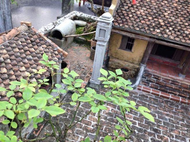 Chậu cây bonsai của người đàn ông khiến dân mạng rần rần chia sẻ, gọi là kiệt phẩm 4