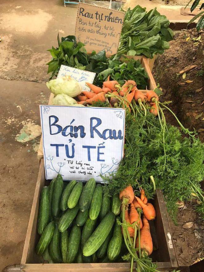 Việc tử tế dễ thương nhất hôm nay: Bán rau sạch tự nhiên, người mua rau tự bỏ tiền vào thùng! 2