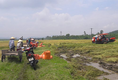 Hà Tĩnh: Xuất hiện giang hồ bảo kê  máy gặt lúa chặt chém nông dân mùa lũ 1