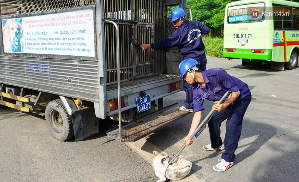 Người Hà Nội nói về việc thành phố muốn người dân từ bỏ thói quen ăn thịt chó: Yêu và ăn là 2 chuyện khác nhau - Ảnh 9.