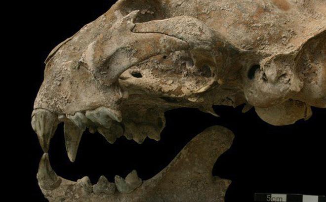 Hình ảnh Bí ẩn quái thú chết cùng cô gái trong mộ cổ Maya số 1