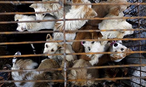 Hạ viện Mỹ thông qua dự luật cấm ăn thịt chó, mèo 1