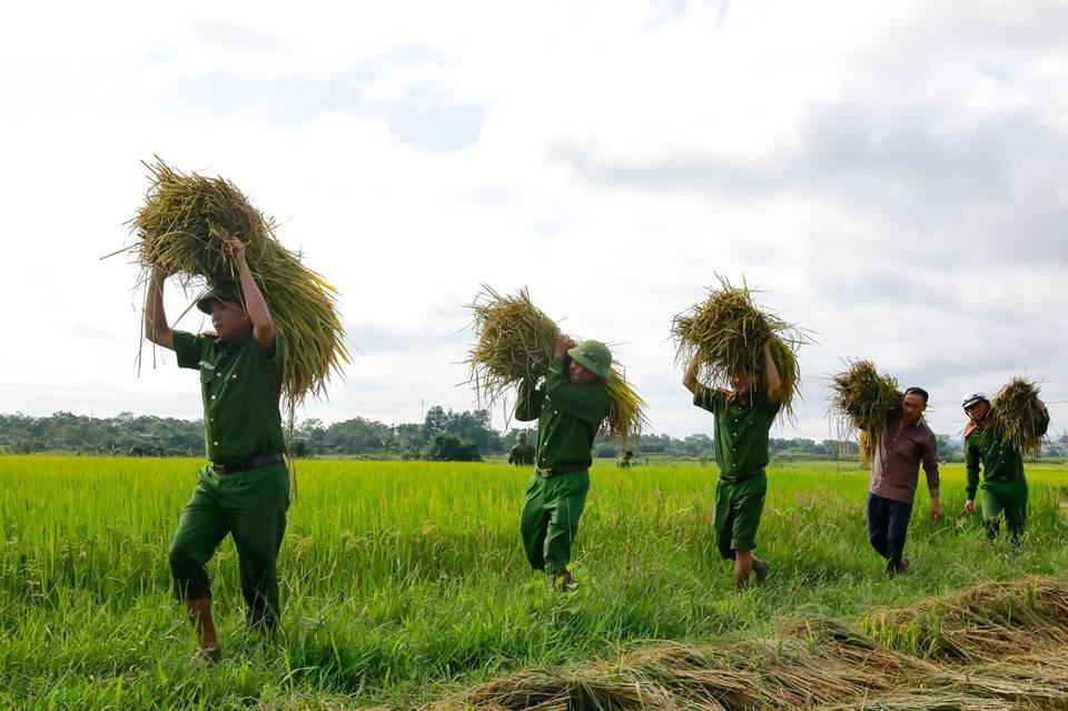 """Công an giúp người dân di dời nhà cửa, gặt lúa """"chạy"""" bão Mangkhut 4"""