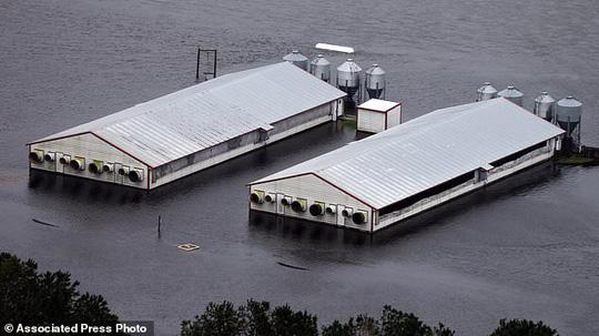 Mỹ: Rắn độc xuất hiện trong nước lũ sau siêu bão 1