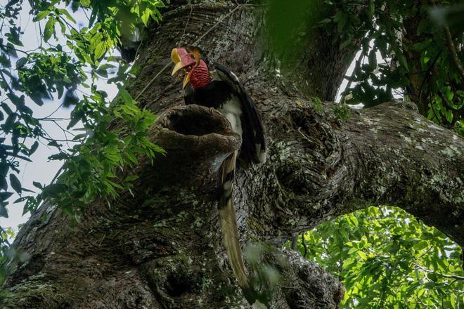 """Nước mắt chim Tê Điểu: """"Báu vật sống"""" bị săn lùng vì có chiếc mỏ đắt gấp 3 lần ngà voi 6"""