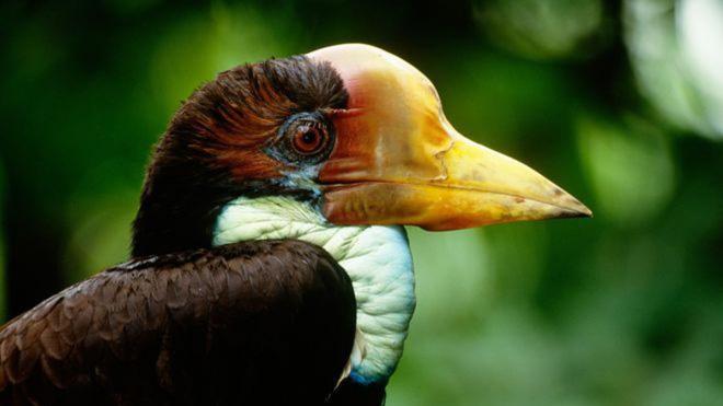 """Nước mắt chim Tê Điểu: """"Báu vật sống"""" bị săn lùng vì có chiếc mỏ đắt gấp 3 lần ngà voi 9"""