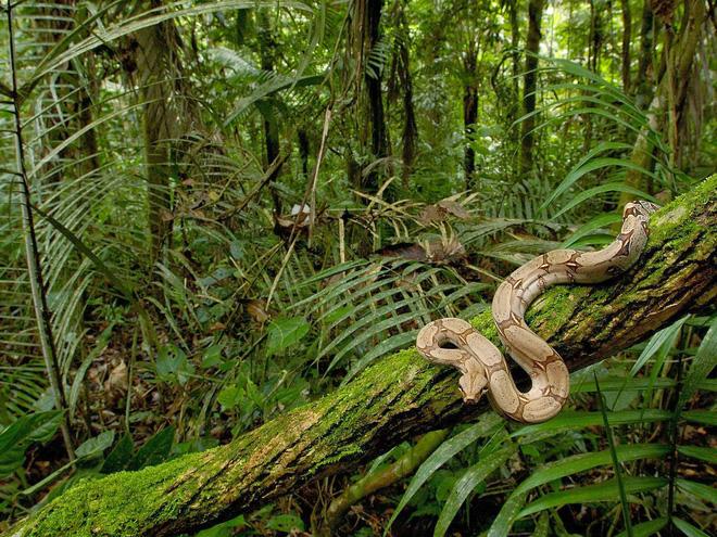 Chuyến thám hiểm nghiệt ngã vào rừng già Amazon: Cả đoàn biến mất, không ai lý giải nổi 2