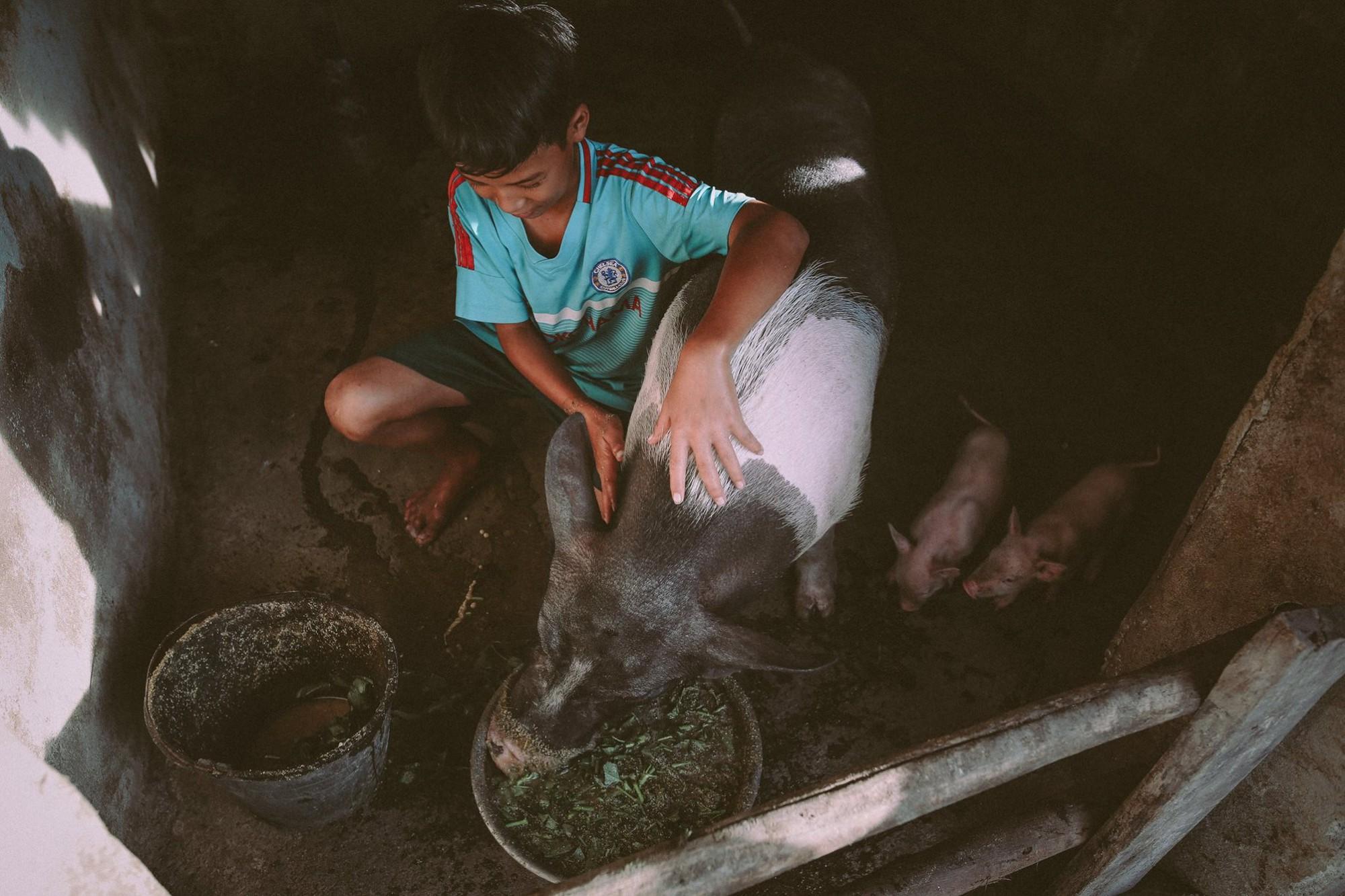 Bộ ảnh xúc động về cậu bé mồ côi ở Quảng Nam tự lập từ năm 12 tuổi, nuôi lợn để được đến trường 2