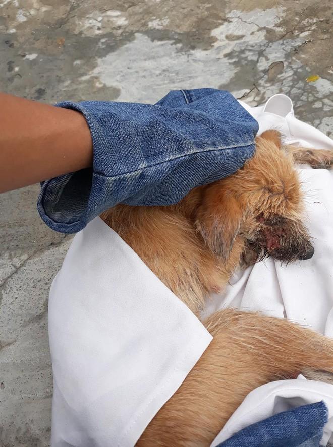 Thương cảm câu chuyện chú chó nhỏ bị bệnh nặng chọn cái chết xa nhà và gặp được chàng thanh niên tốt bụng 2