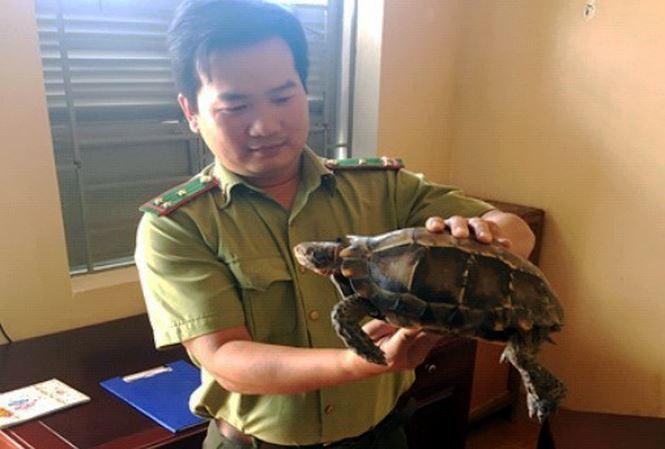 Người dân Kon Tum phát hiện rùa quý 1,5 kg bò lang thang trên đường 1
