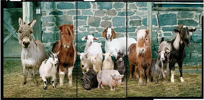 Nhiếp ảnh sáng tạo: Chụp hình động vật theo phong cách boy-band thập niên 90 6