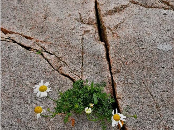 Những bức ảnh chứng minh uy lực khủng khiếp của tự nhiên 11