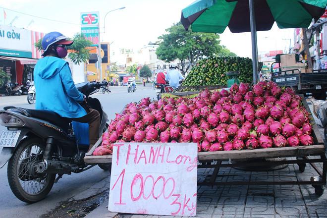 Hình ảnh Bình Thuận: Nông dân khóc ròng vì thanh long rớt giá phải đem cho bò ăn số 3