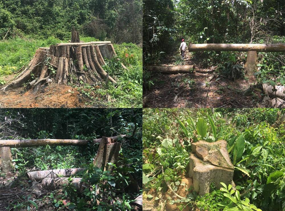 Bình Phước: Tỉnh ủy yêu cầu điều tra vụ phá rừng nghiêm trọng 1