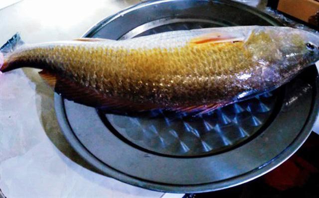 Ngư dân Huế câu được cá nghi sử vàng tiền tỷ 1