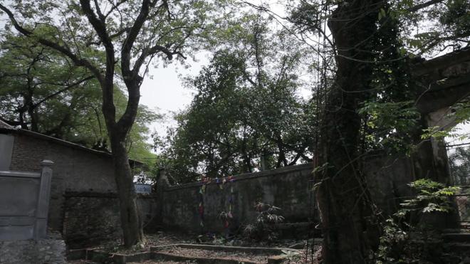 Cây sưa đỏ trăm tỷ làng Phụ Chính: Vỏ ngoài sẽ bị cấu nát thành mùn, bán càng sớm càng tốt 4