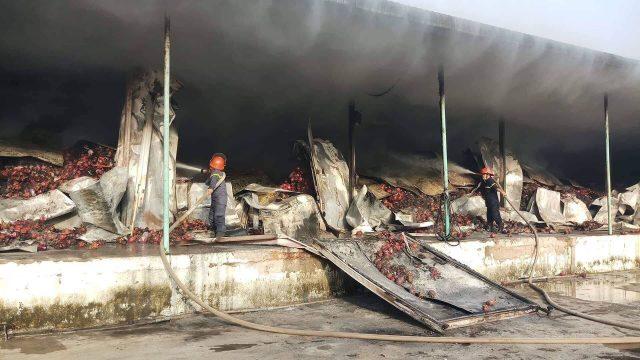 Hình ảnh Hỏa hoạn thiêu rụi kho thanh long 260 tấn ở Bình Thuận số 1