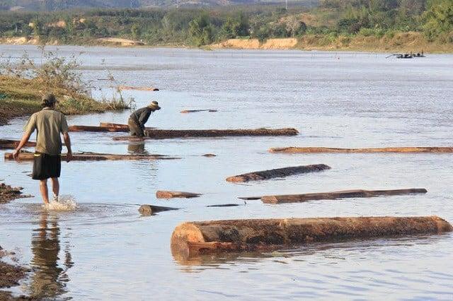 Lâm Đồng: Khai thác cát dưới sông, phát hiện gần 55 m3 gỗ sao đen 1