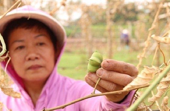 Hà Nội: 200 cây dược liệu ở Vạn Phúc bị chặt phá trong đêm 1