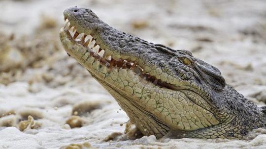 Úc: Đang đi câu cá, người phụ nữ bị cá sấu tha đi 1