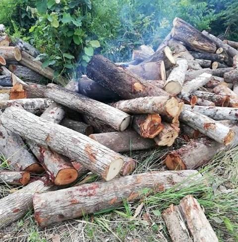 Côn đồ ngang nhiên tạt xăng đốt gỗ tang vật  khiến một cán bộ kiểm lâm bị bỏng nặng 1
