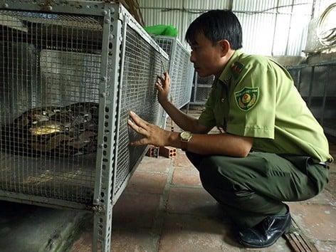 Dân vây bắt con trăn nặng 28kg, dài 7m, cơ thể có nhiều vết thương ngoài đồng hoang 2