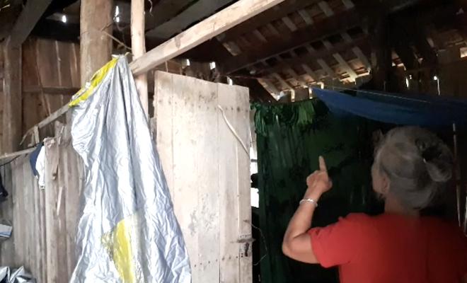 Một gia đình sống chung với hàng nghìn con ong vò vẽ kịch độc trong phòng ngủ 2