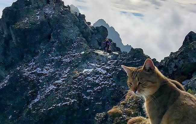 Đời sống - Chuyện thật như đùa: Dân leo núi phát hiện ra một chú mèo nhà ngồi ngẫm sự đời trên đỉnh núi cao nhất Ba Lan