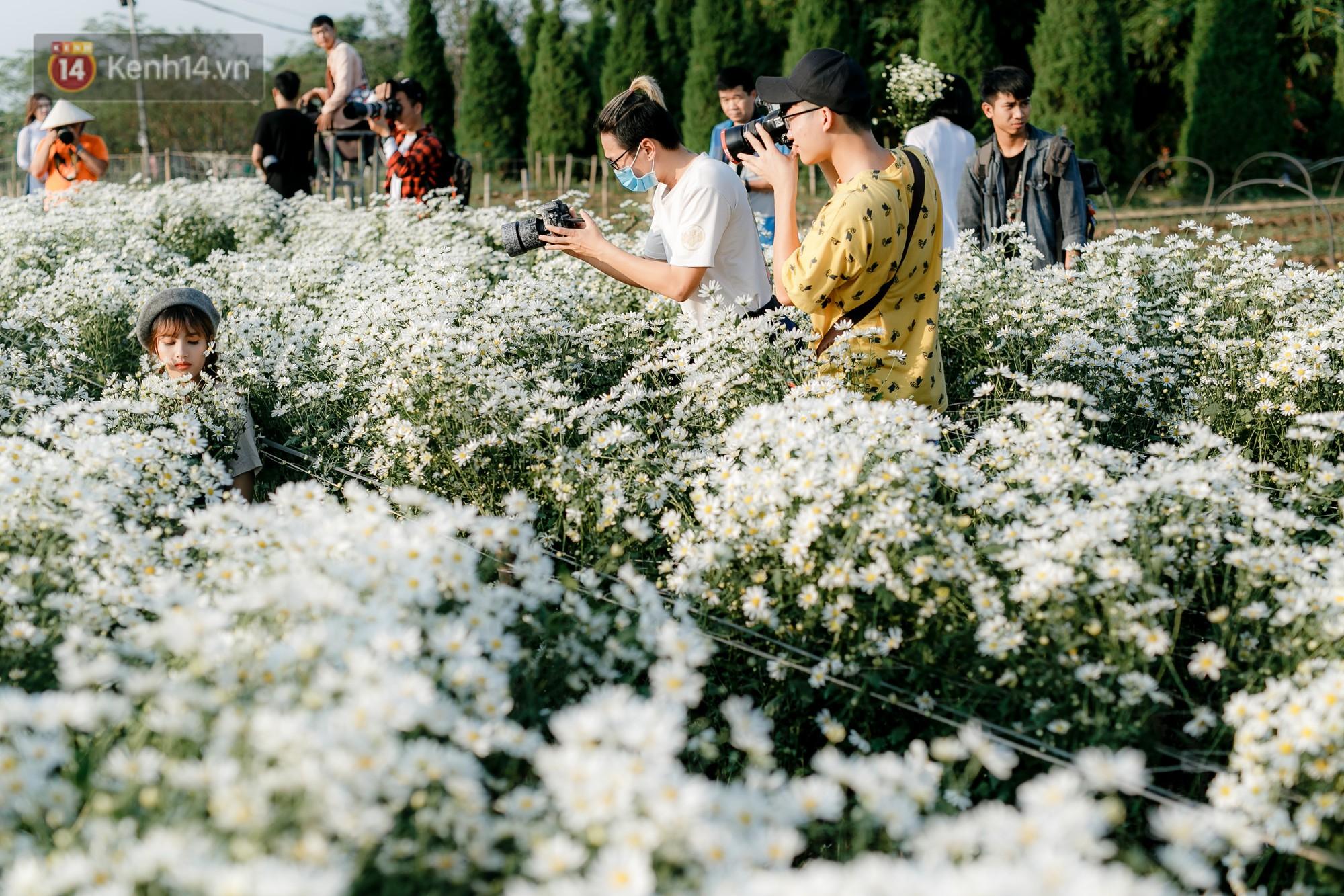 Vườn cúc hoạ mi ở Hà Nội 'thất thủ' cuối tuần: 1 mét vuông có chục nhiếp ảnh gia và mẫu 12