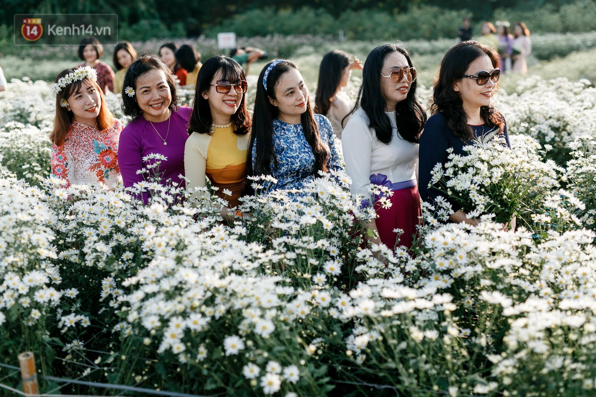 Vườn cúc hoạ mi ở Hà Nội 'thất thủ' cuối tuần: 1 mét vuông có chục nhiếp ảnh gia và mẫu 5