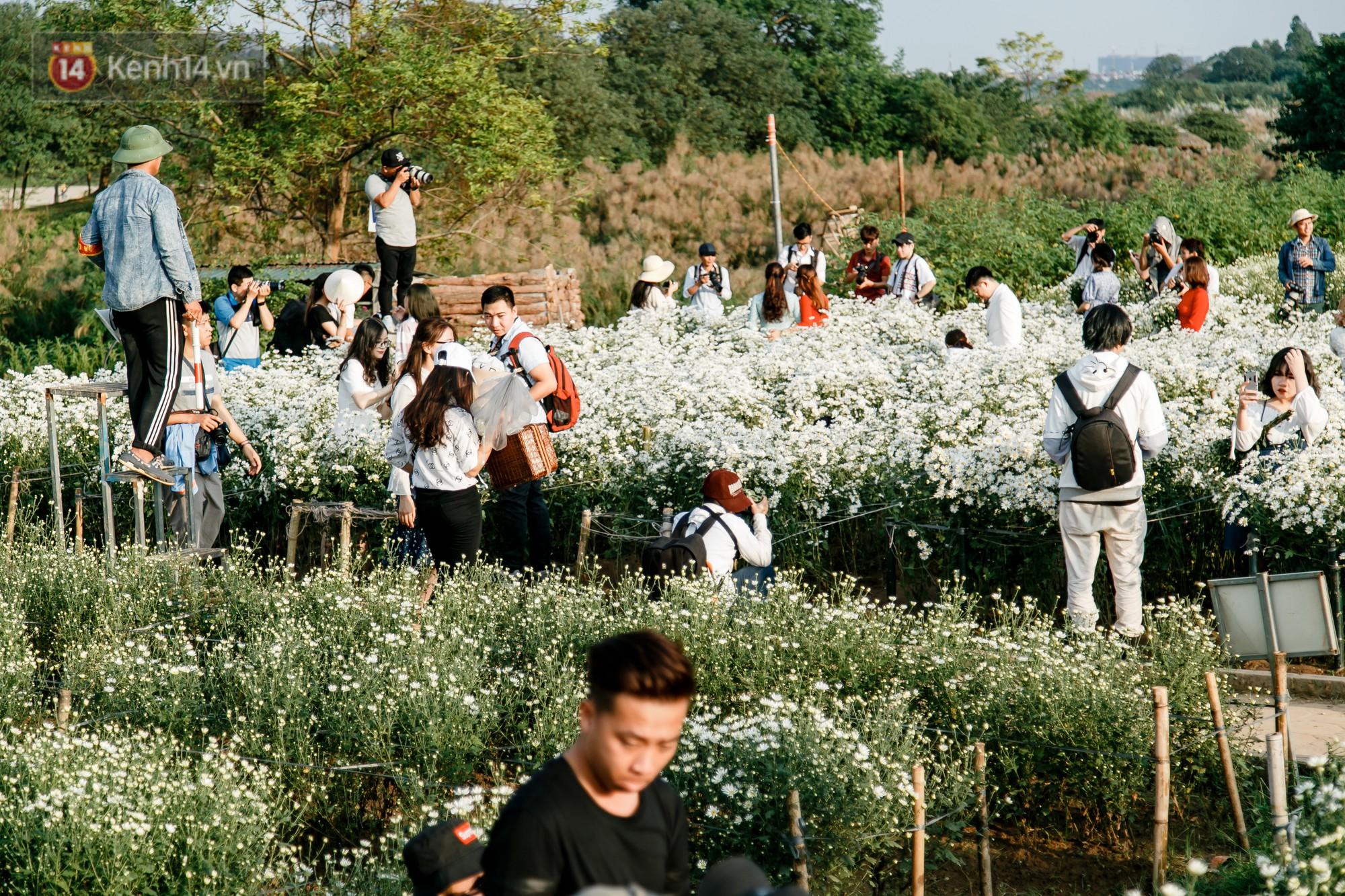 Vườn cúc hoạ mi ở Hà Nội 'thất thủ' cuối tuần: 1 mét vuông có chục nhiếp ảnh gia và mẫu 2