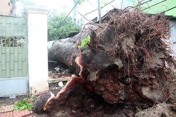 Tin bão mới nhất: Những thiệt hại đầu tiên khi bão số 9 Usagi đổ bộ vào các tỉnh Nam Trung Bộ 3