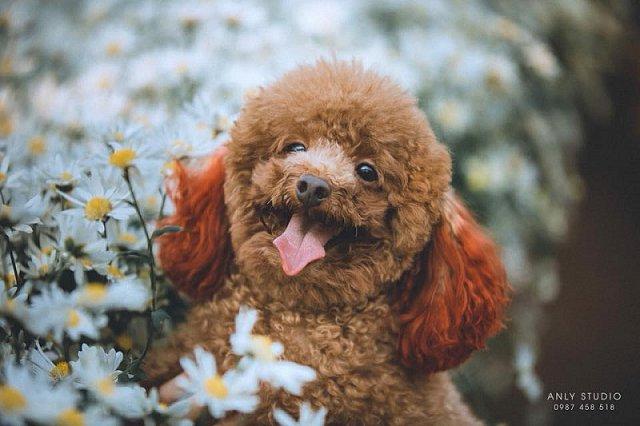 Chú chó bất ngờ tỏa sáng trên MXH khi chụp cùng cúc họa mi, ăn đứt mẫu ảnh xinh đẹp 6