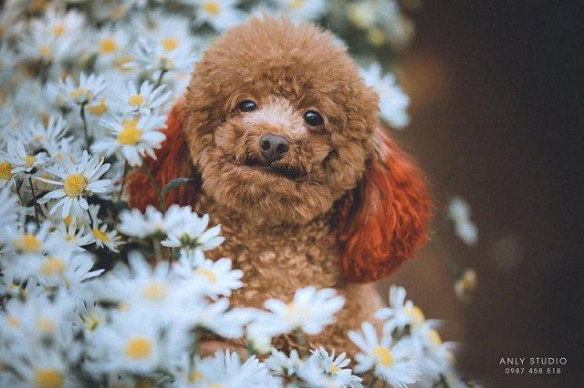 Chú chó bất ngờ tỏa sáng trên MXH khi chụp cùng cúc họa mi, ăn đứt mẫu ảnh xinh đẹp 2