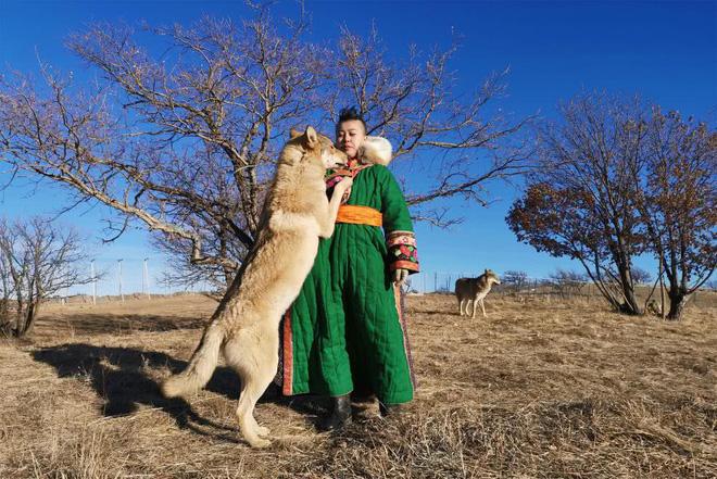 Cô gái Mông Cổ với dàn thú cưng độc 8 con sói, 3 bạn trai đều đòi chia tay vì sợ cãi nàng sẽ bị ăn thịt 4