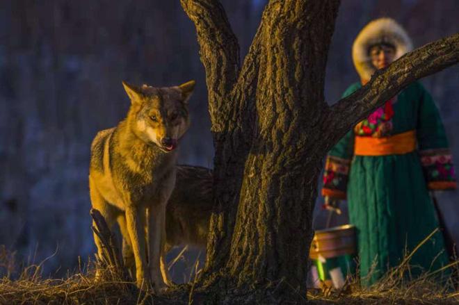 Cô gái Mông Cổ với dàn thú cưng độc 8 con sói, 3 bạn trai đều đòi chia tay vì sợ cãi nàng sẽ bị ăn thịt 7