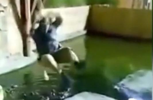 Kinh hãi cảnh người đàn ông tuột tay rơi xuống bể đầy cá sấu đói khát 1