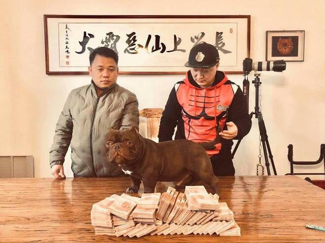 Hình ảnh Đại gia Biên Hòa mang 2,6 tỉ đồng sang Trung Quốc mua bằng được chú chó yêu thích số 1