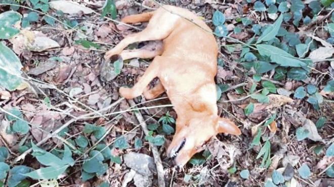 Xúc động chú chó hy sinh để cứu cả gia đình chủ 1