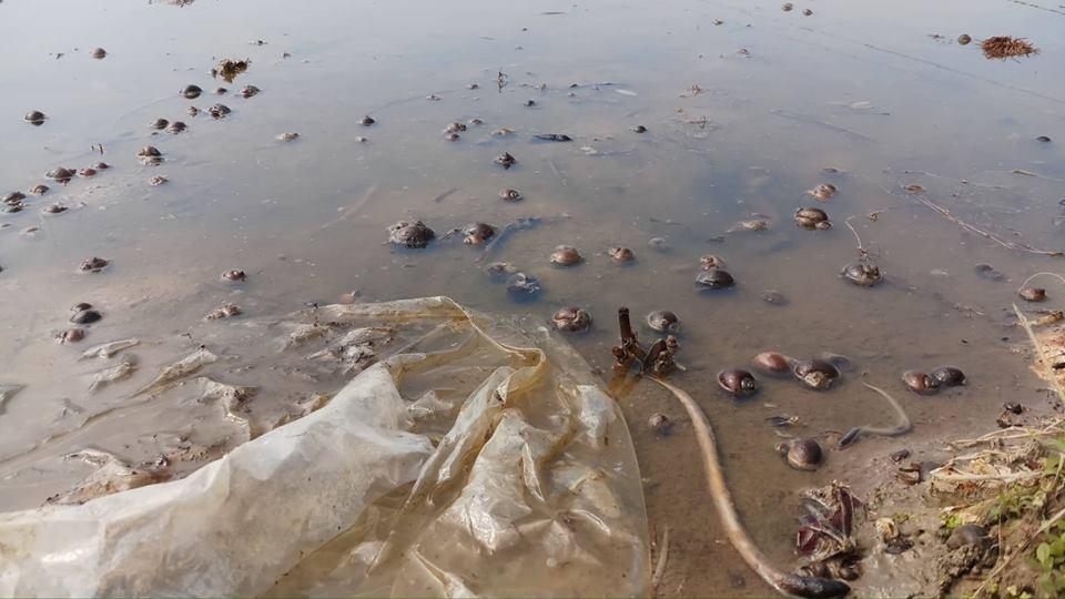 Thâu đêm thu gom 4 nghìn lít dầu tràn ra ruộng ở Thanh Hóa, tôm cá chết hàng loạt 3