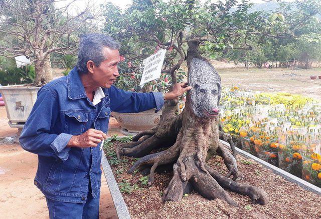 Hình ảnh Cận cảnh cây khế đầu heo có giá nửa tỷ đồng được bày bán thu hút người dân Sài Gòn số 3