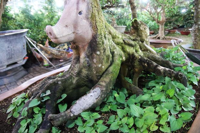 Hình ảnh Cận cảnh cây khế đầu heo có giá nửa tỷ đồng được bày bán thu hút người dân Sài Gòn số 7