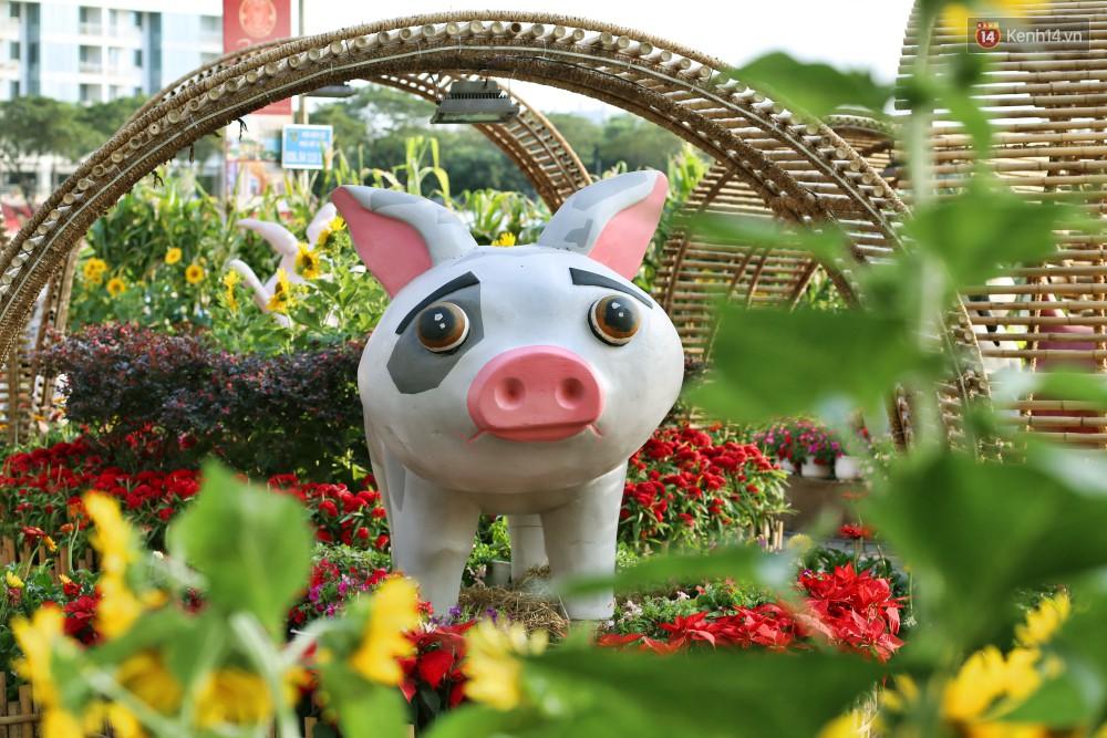 Ngắm đàn lợn với biểu cảm