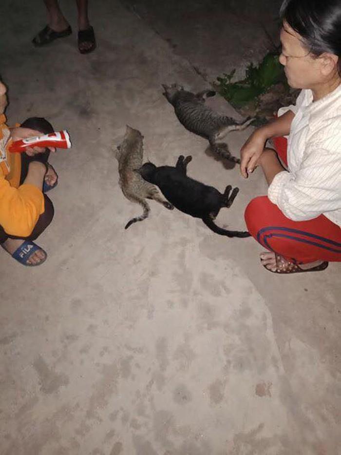 Nam Định: Hơn 1 tạ mèo trong một xã lăn đùng ra chết bất thường  2